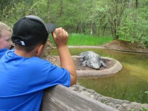 DJ and Logan get a close-up look at a huge alligator!